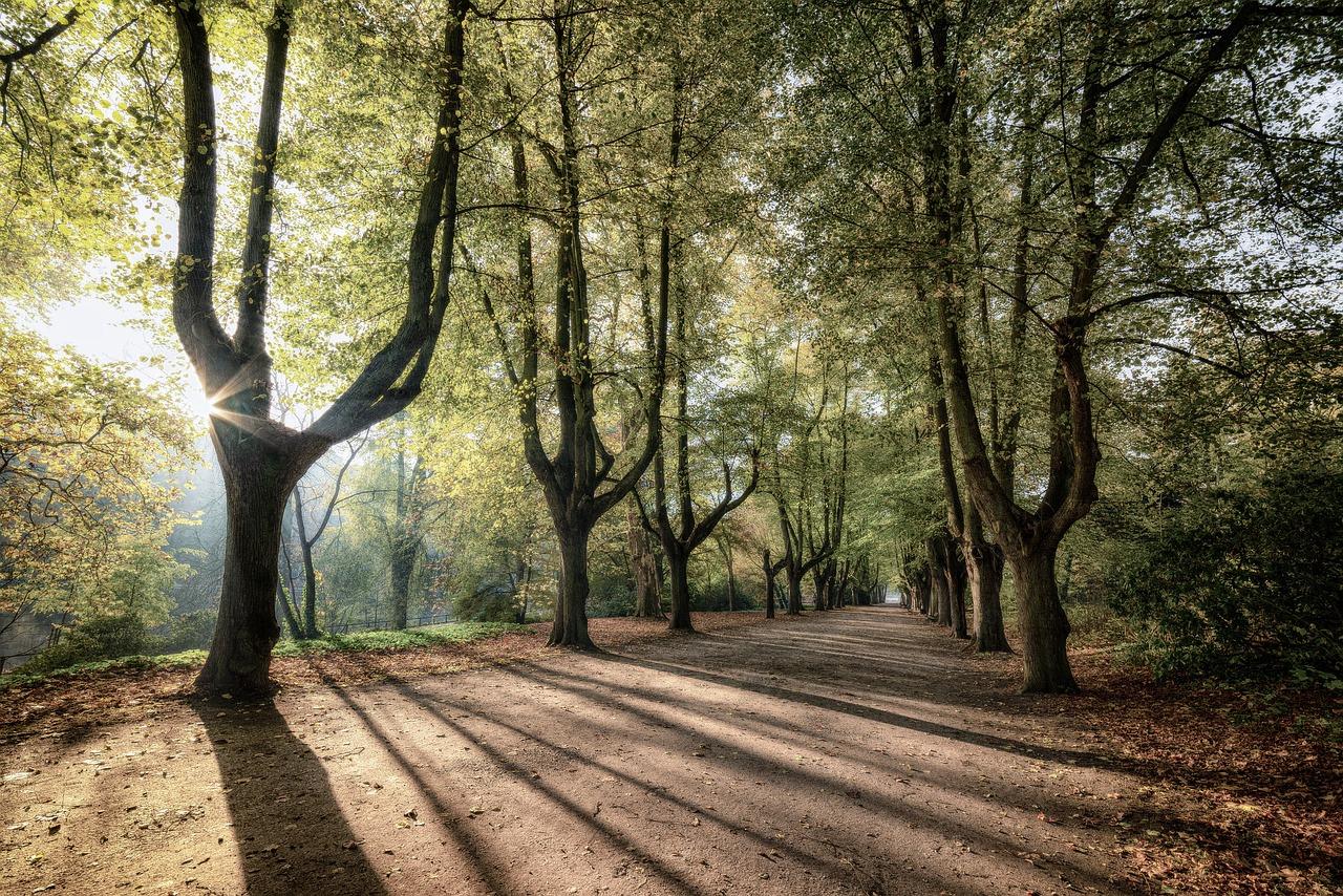 park śląski - prezydent Chorzowa walczy o zieleń